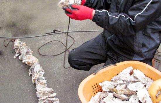 蔵内漁港にて作業ボランティア