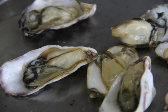 牡蠣や海苔の養殖も活気を取り戻している