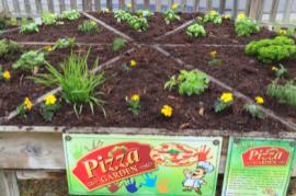 ピザ菜園?! 住民の食生活を支えるコミュニティー・ガーデン