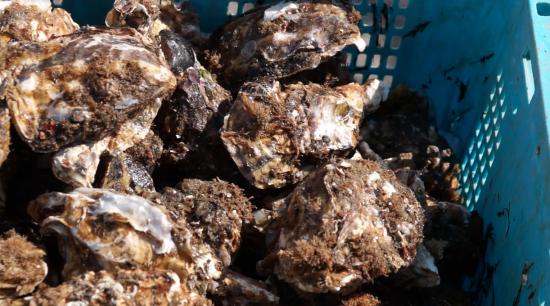 【東日本大震災】加速する「漁業離れ」を食い止める!