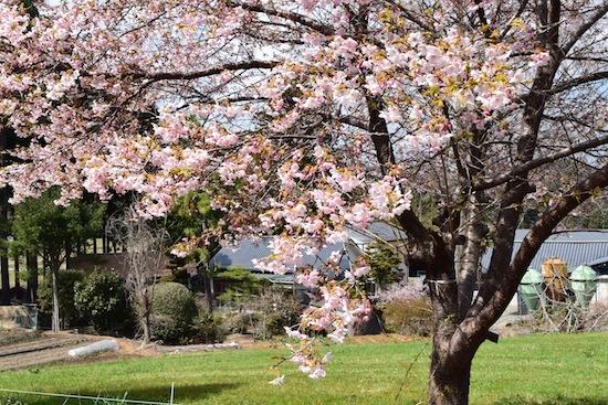 【春の便りをお届けします】福島 南相馬から